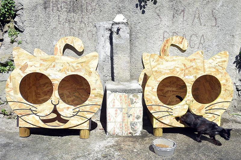 Município de Braga esterilizou 876 gatos e 150 cães nos últimos 3 anos